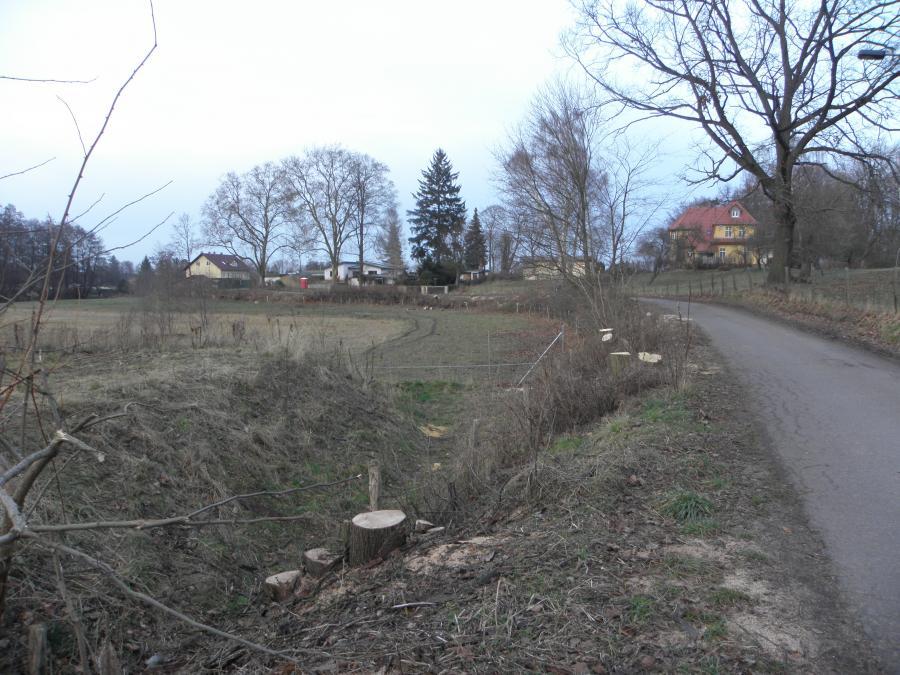 Fäll- und Rodungsarbeiten Kohlgarten 1